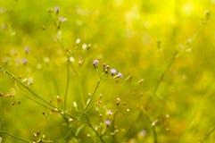 Lokalisierte Blume auf grünem Feld Stockfoto