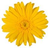 Lokalisierte Blume mit einem weißen Hintergrund lizenzfreies stockbild