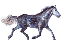 Lokalisierte einzelnes Tier des Aquarells Pferde stock abbildung
