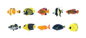 Lokalisierte Fischillustration Stellen Sie von den Frischwasseraquariumkarikaturfischen ein stock abbildung