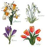 Lokalisierte Frühlingsblumensträuße des Vektors Sammlung auf Weiß stock abbildung