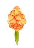 Lokalisierte gelbe Wiesenblume Stockbild