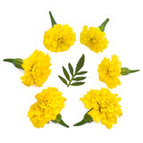 Lokalisierte gelbe Wiesenblumen Lizenzfreie Stockbilder