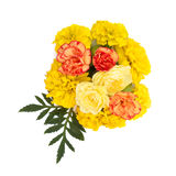 Lokalisierte gelbe Wiesenblumen Lizenzfreies Stockfoto