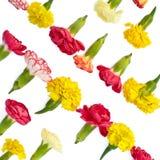 Lokalisierte helle Wiesenblumen Lizenzfreies Stockfoto