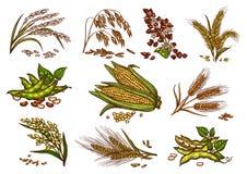 Lokalisierte Ikonen des Kornes und der Getreide Vektor stock abbildung