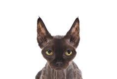 Lokalisierte Katze Stockfotografie