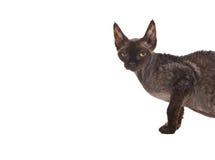 Lokalisierte Katze Stockbilder