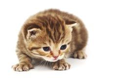 Lokalisierte Katze Stockbild