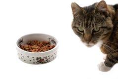 Lokalisierte Katze. stockfotografie