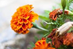 Lokalisierte orange Blume stockfotos