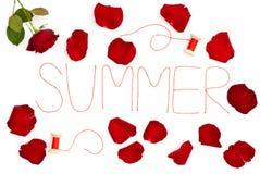 Lokalisierte rosafarbene und helle rote Blumenblätter Lizenzfreie Stockbilder