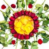 Lokalisierte Rosen und helle Blumenblätter Lizenzfreies Stockbild