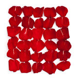 Lokalisierte rote Blumenblätter von stiegen Lizenzfreies Stockfoto