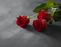Lokalisierte rote Rosen mit einem grauen Hintergrund Stockfoto