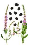 Lokalisierte saftige Brombeeren und Blumen Lizenzfreies Stockfoto
