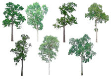 Lokalisierte Sammlung Bäume stockfotografie