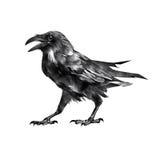 Lokalisierte sitzende sitzende Krähe des Vogels der Zeichnung Stockfotografie