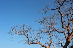Lokalisierte trockene Baum bances Lizenzfreies Stockbild