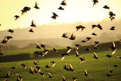 Lokalisierte Vektorikonen auf schwarzem Hintergrund Lizenzfreies Stockbild
