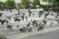 Lokalisierte Vektorikonen auf schwarzem Hintergrund Stockfotografie