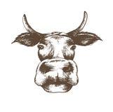 Lokalisierte weiße Kuh des Skizzenvektors Illustration lizenzfreie abbildung