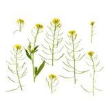 Lokalisierte Wiesenblumen Stockfotografie