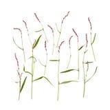 Lokalisierte Wiesenblumen Lizenzfreies Stockfoto