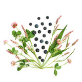 Lokalisierte Wiesenblumen und -heidelbeeren Stockfotos