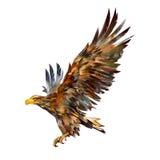 Lokalisierte Zeichnung eines Fliegenadlers auf der Seite Stock Abbildung