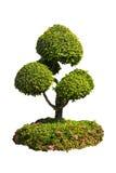 Lokalisierter Baum auf einem weißen Hintergrund Lizenzfreies Stockfoto