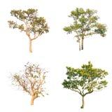 Lokalisierter Baum auf weißem Hintergrund Lizenzfreie Stockfotografie