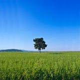 Lokalisierter Baum in der grünen Landschaft Lizenzfreie Stockfotografie