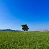 Lokalisierter Baum in der grünen Landschaft Stockfotografie