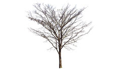 Lokalisierter Baum ohne Blatt stockbild