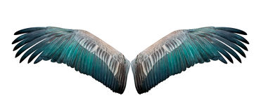 Lokalisierter Flügel Lizenzfreies Stockfoto