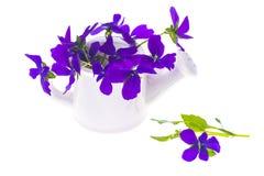 Lokalisierter Gartendesignblumenstrauß von purpurroten Blumen im weißen wateri Lizenzfreie Stockfotografie