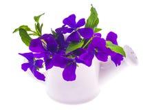 Lokalisierter Gartendesignblumenstrauß von purpurroten Blumen im weißen wateri Lizenzfreie Stockfotos