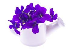 Lokalisierter Gartendesignblumenstrauß von purpurroten Blumen im weißen wateri Lizenzfreies Stockbild
