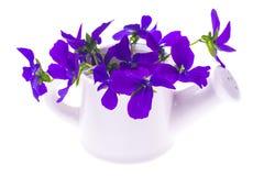 Lokalisierter Gartendesignblumenstrauß von purpurroten Blumen im weißen wateri Stockbilder