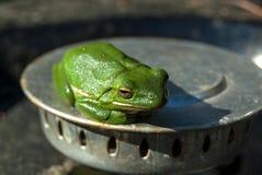 Lokalisierter grüner Baumfrosch stockfoto