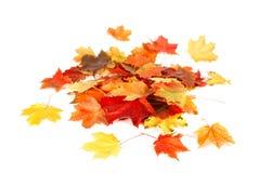 Lokalisierter Herbstlaub auf Weiß Stockfotos