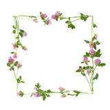Lokalisierter quadratischer Rahmen von Kleeblumen Lizenzfreies Stockfoto