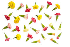 Lokalisierter Satz Wiesenblumen Lizenzfreie Stockfotos