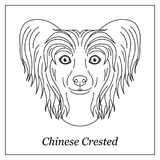 Lokalisierter schwarzer Entwurfskopf des chinesischen unbehaarten Hundes mit Haube auf weißem Hintergrund Linie Karikaturzucht-Hu lizenzfreie abbildung