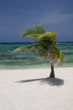 Lokalisierter Tropeninsel-Baum Stockfoto