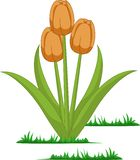 Lokalisierter Tulpenblumenvektor lizenzfreie abbildung