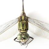 Lokalisierter weißer Hintergrund der Libelle Makro Lizenzfreie Stockfotos