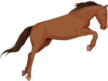 Lokalisiertes Bild des springenden Pferds Stockfotos