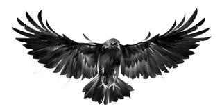 Lokalisiertes Bild des Vogels kräht auf weißem Hintergrund in der Front Lizenzfreie Abbildung